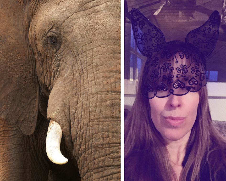 anja-stang-elefant-snap-filter-a-ordet-green-house