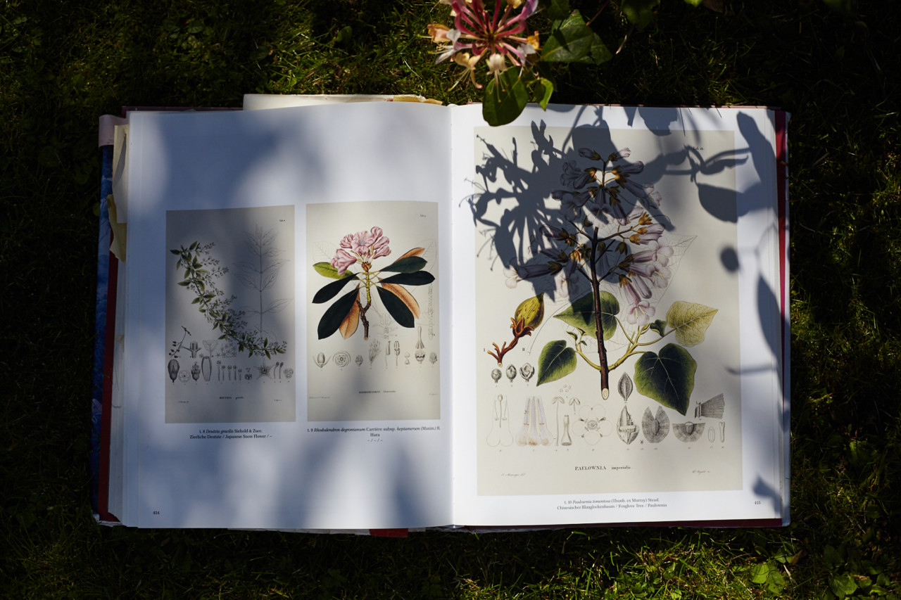 naturales-botaniske-tegninger-green-house