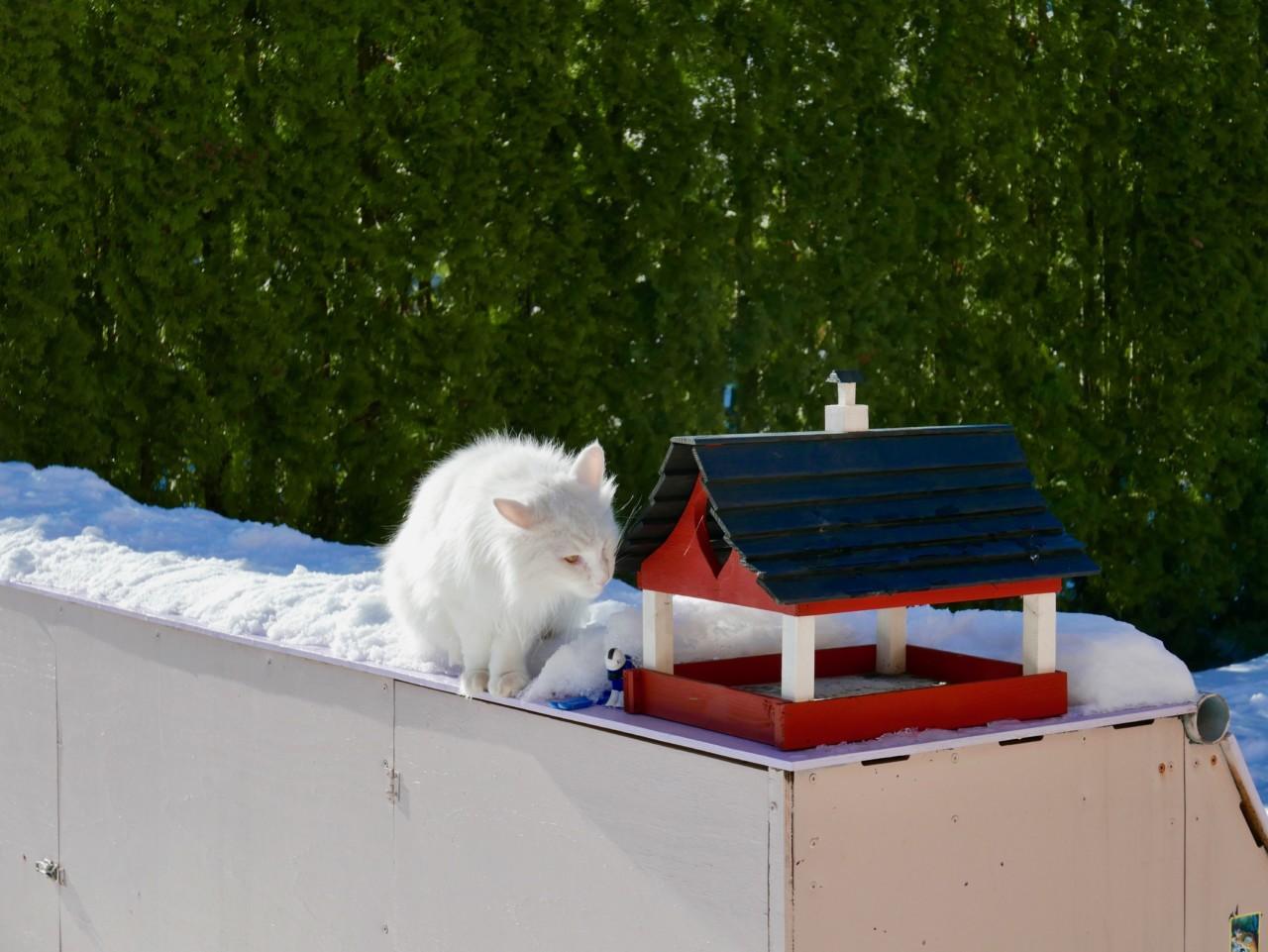 katt-fuglehus-solhatt-sol-vinter-green-house