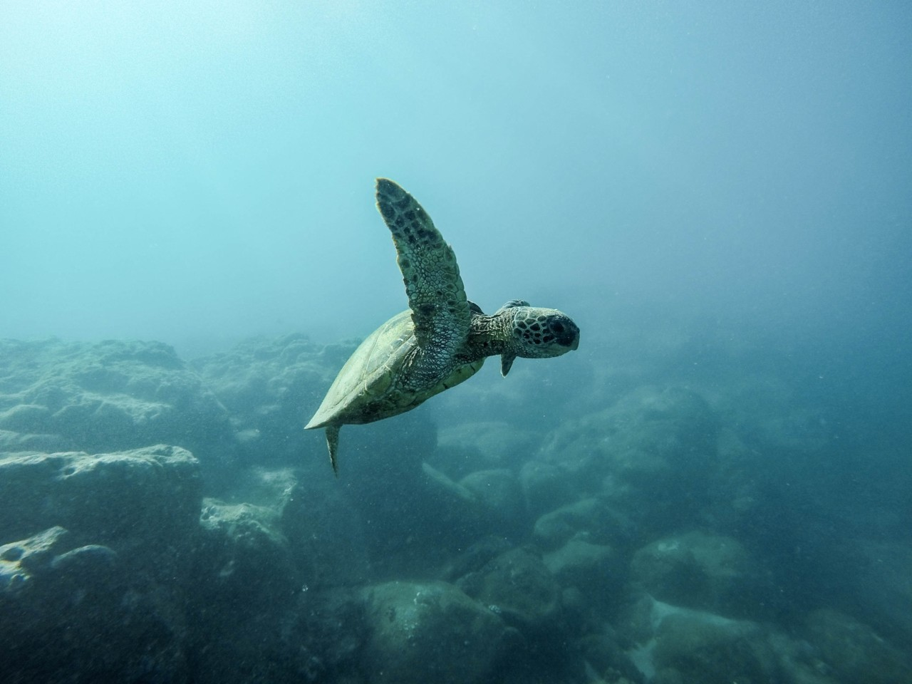 baby-sea-turtle-havskilpadde-strandryddedagen-jeremy-bishop-unsplash