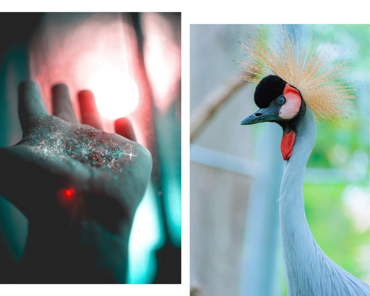 be-an-original-paafugl-glitter-farger-fargerike-mennesker-ari-behn