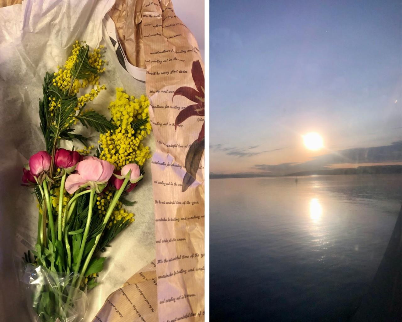 blomster-og-sol-mimosa-ranunkler-nesoddbaaten