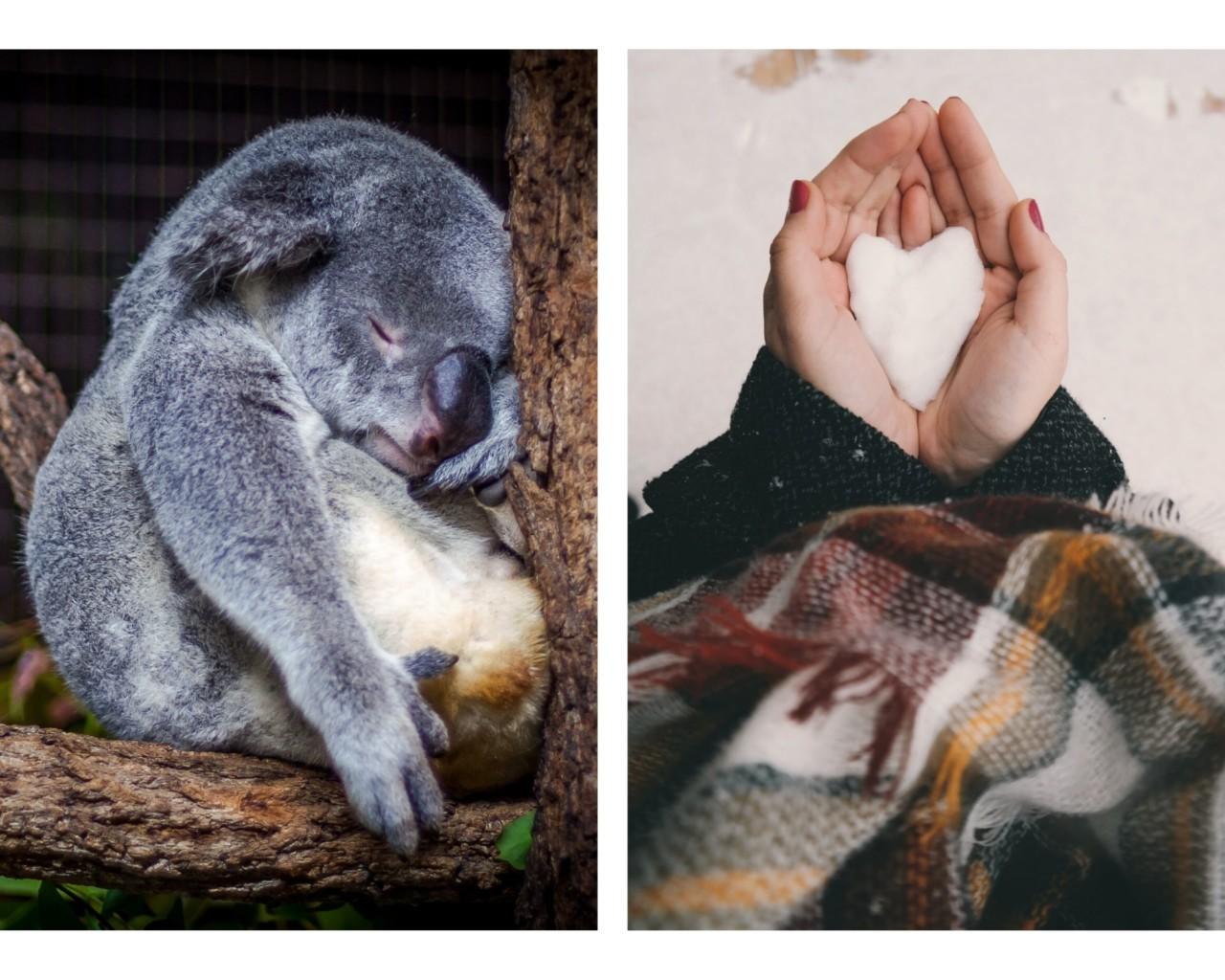 hjerte-i-sno-vinter-koalabjorn-brann-i-australia