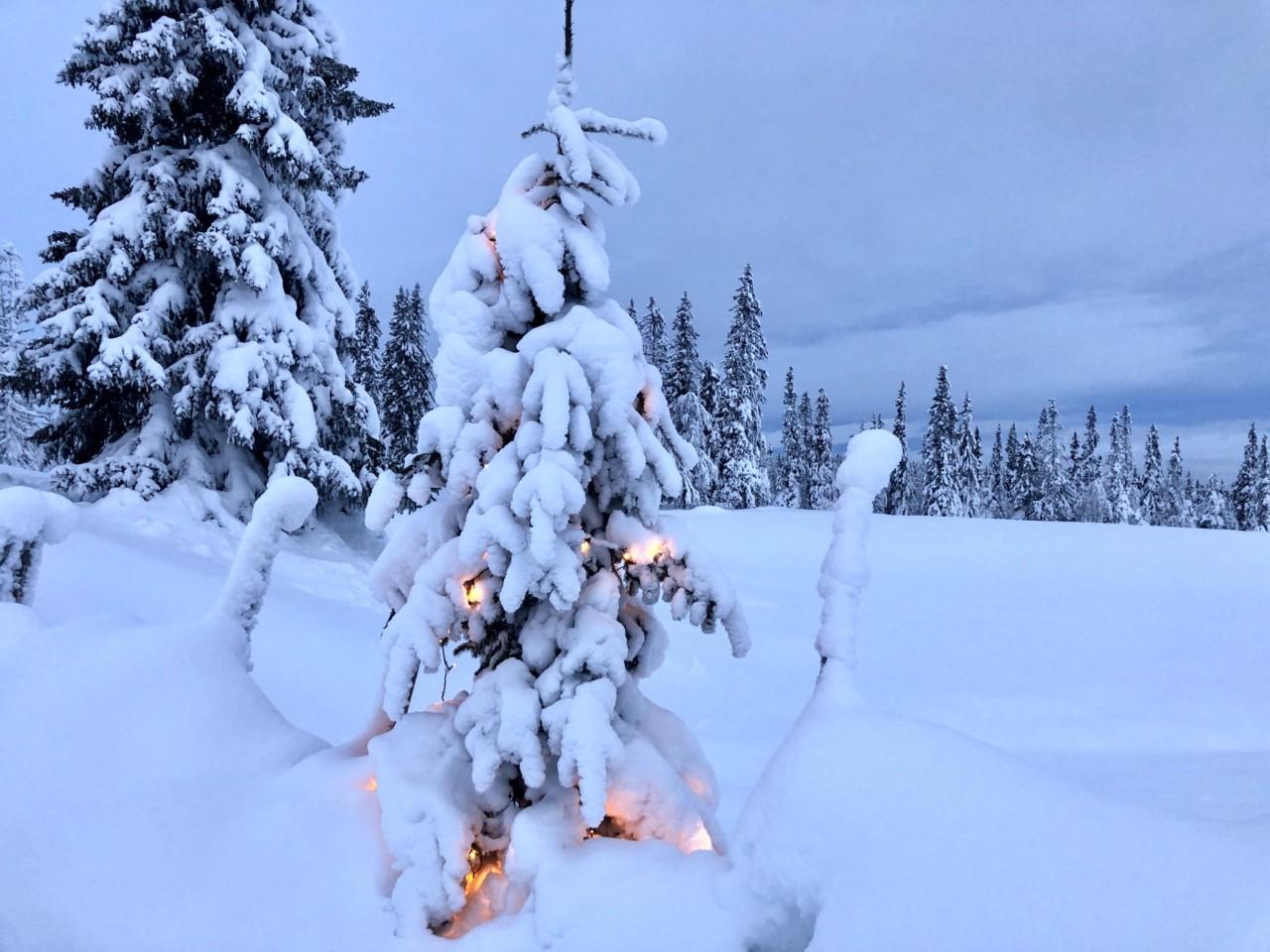 juletre-med-lys-utelys-fjellet-sno-jul-ferie