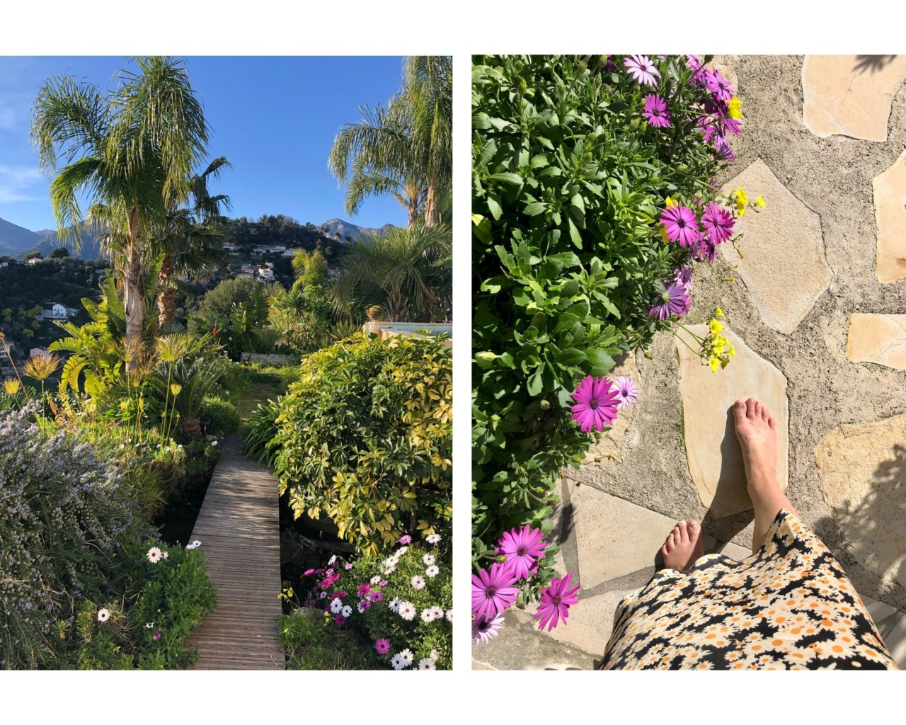 mammas-hage-menton-palmer-blomster-sol