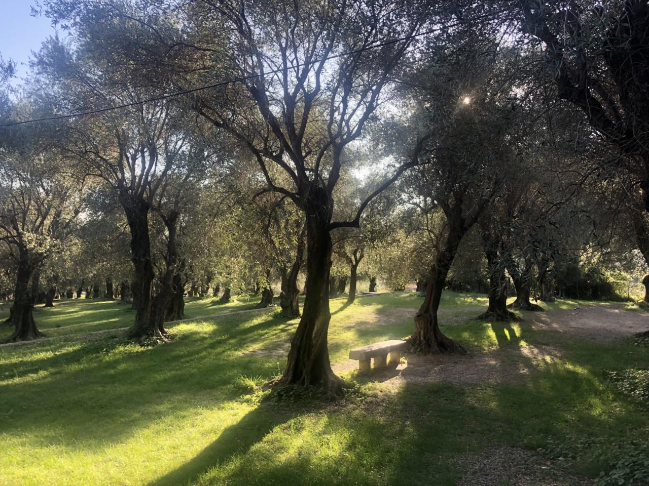 oliventre-park-menton-frankrike-gront-parc-du-pian