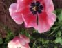 tulipaner-hellviktangen-nesodden-green-house-eco