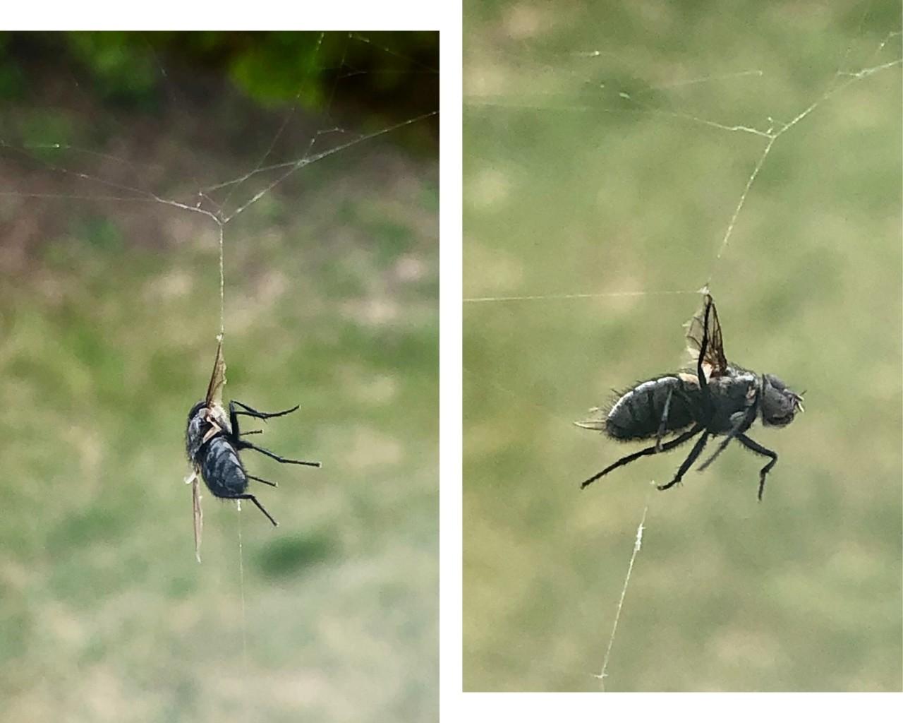 fluen-og-edderkoppen-thriller-dodskamp
