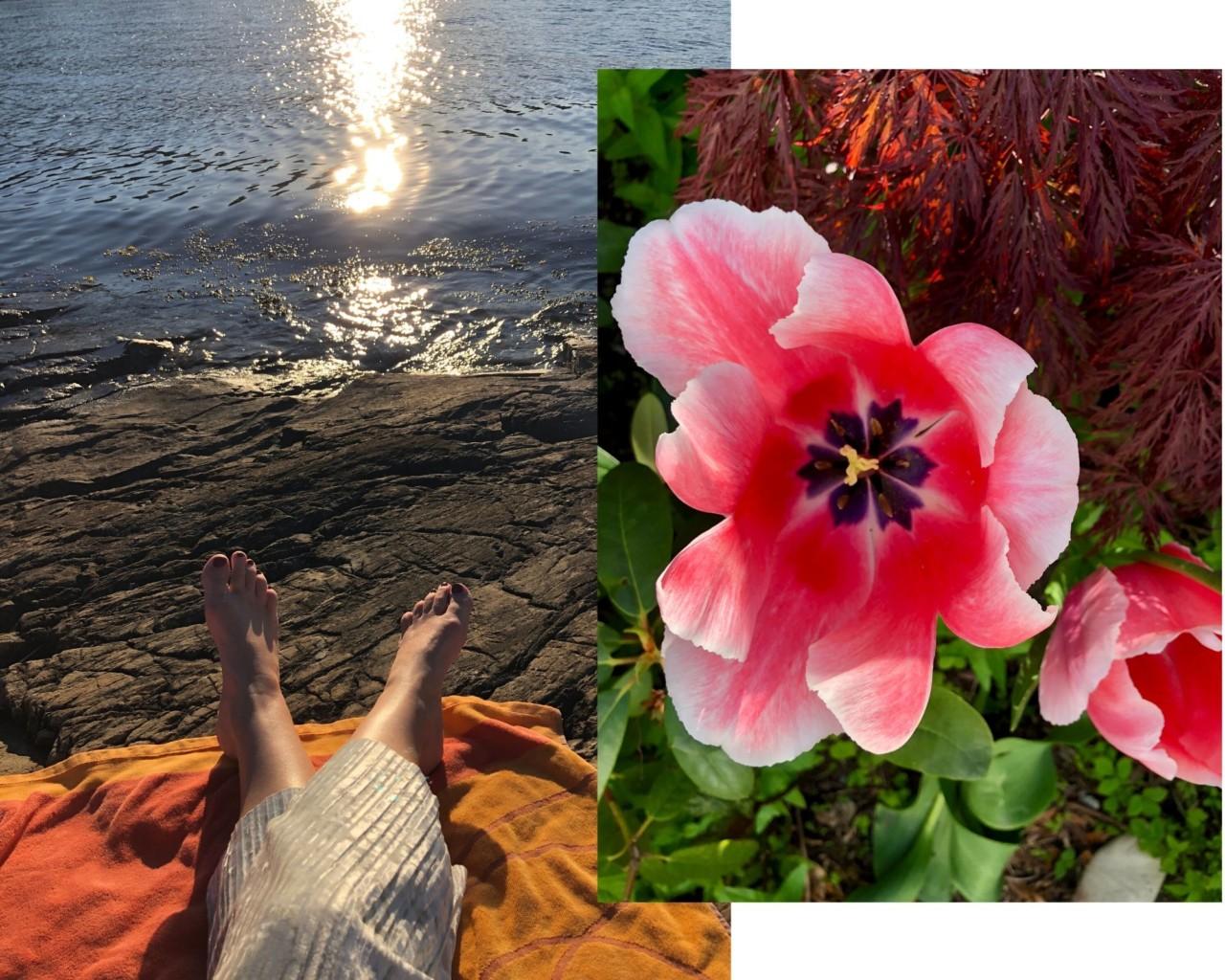 solnedgang-tulipaner-hellviktangen-mai-2020-havet