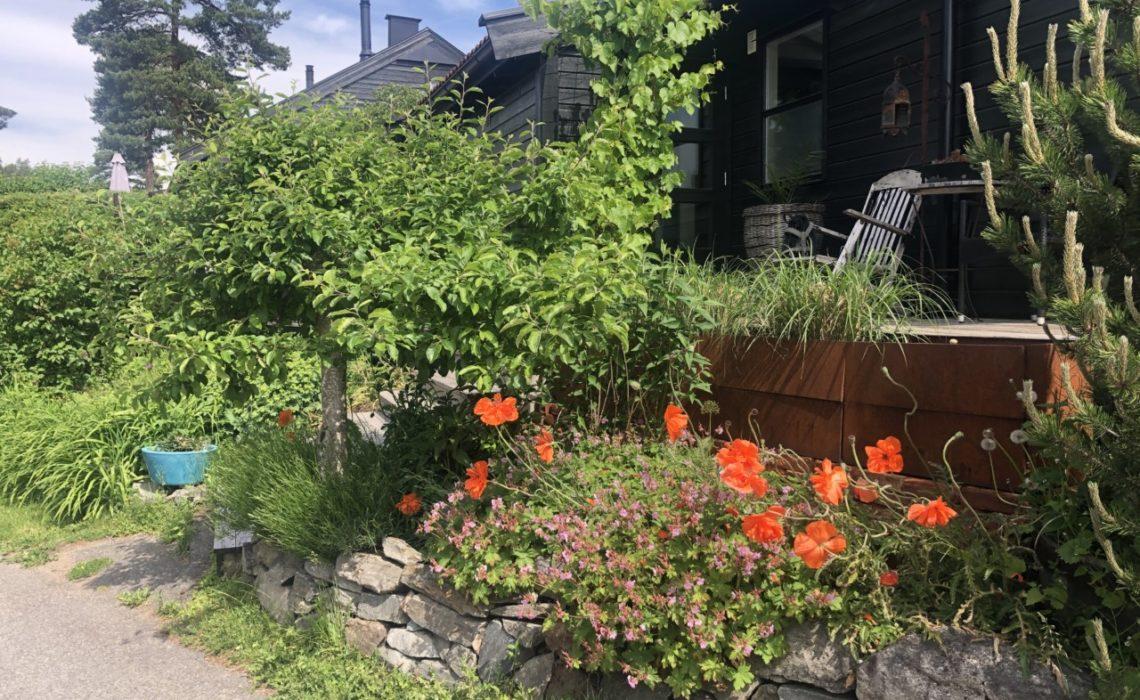 blaabaerstien-nesodden-huset-mitt-valmuer-planter-vindruer