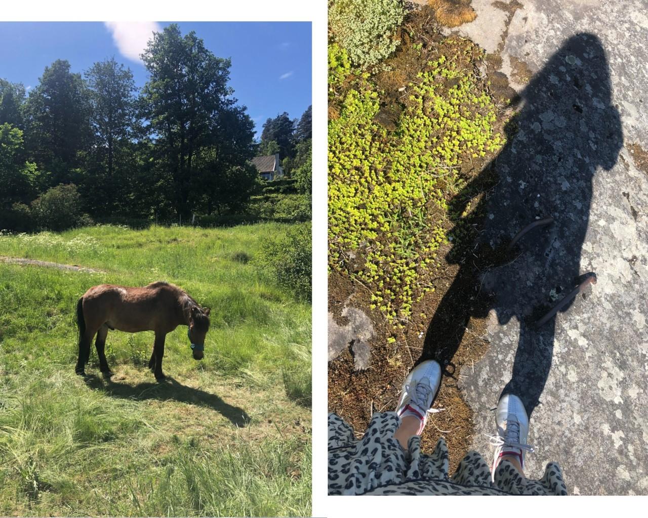 hest-kyststien-ursvik-hage-nesodden