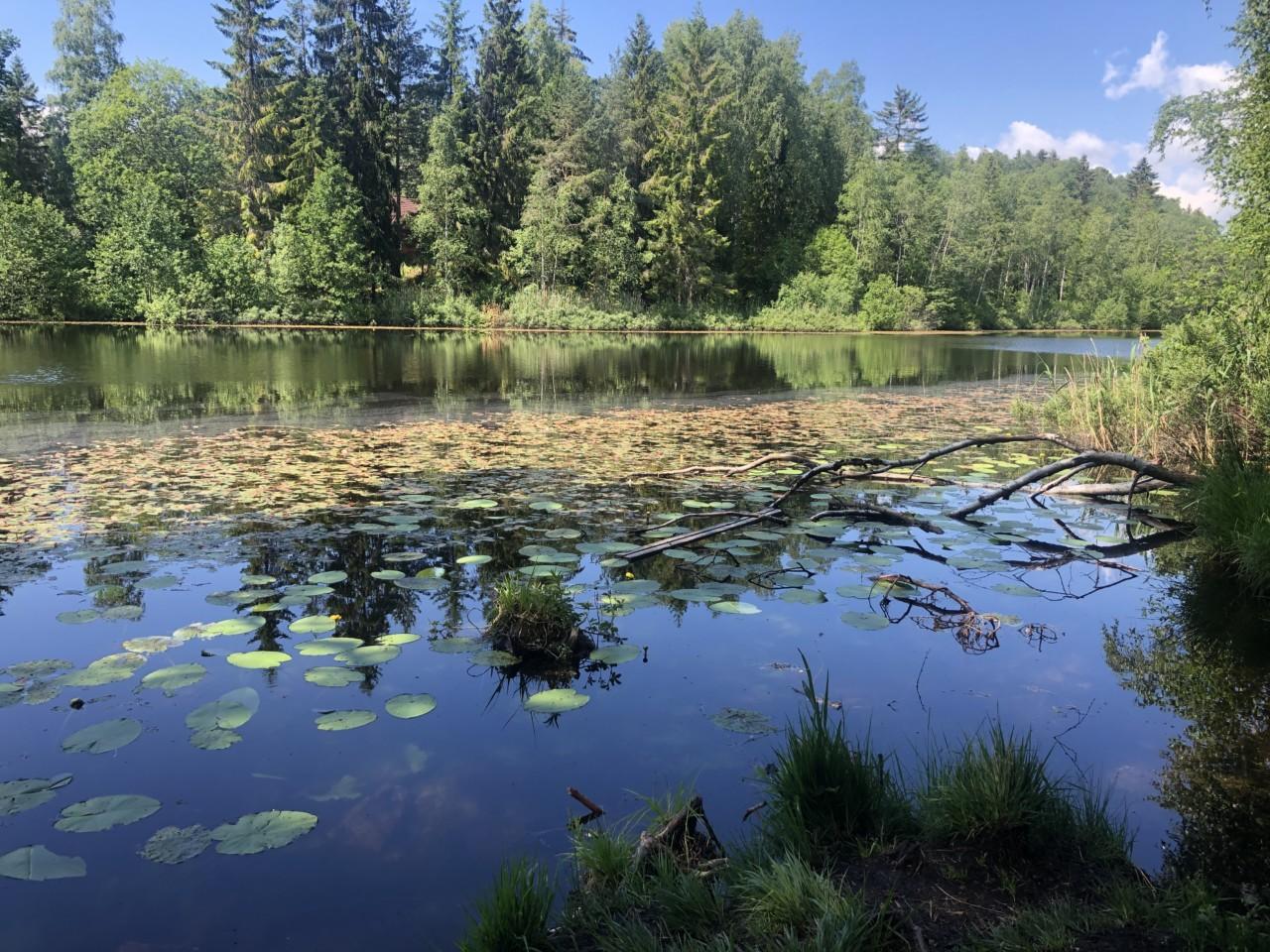 skoklefalltjernet-vannliljer-blabarstien-skog-nesodden-love