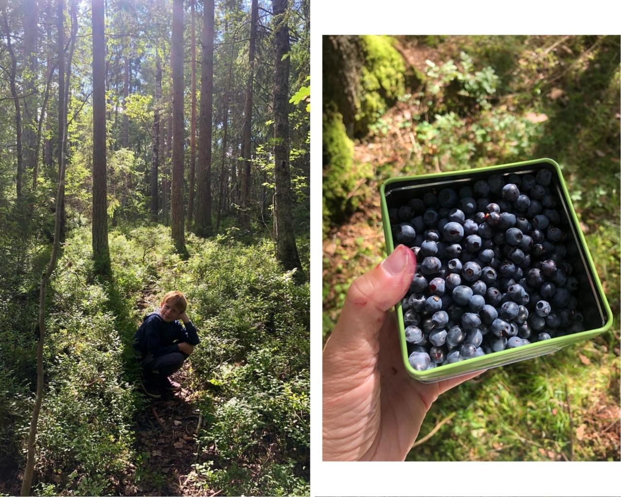 blaabaer-plukking-skog-nesodden-love