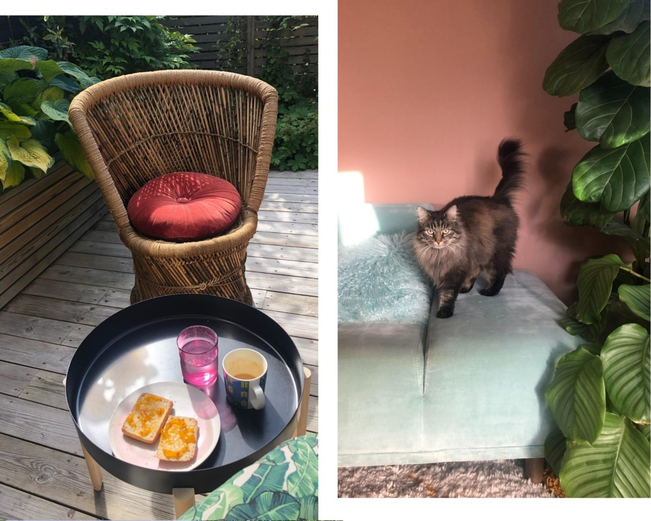 regnskogen-terrasse-nabokatt-sofa-fiolinfiken-hjemme