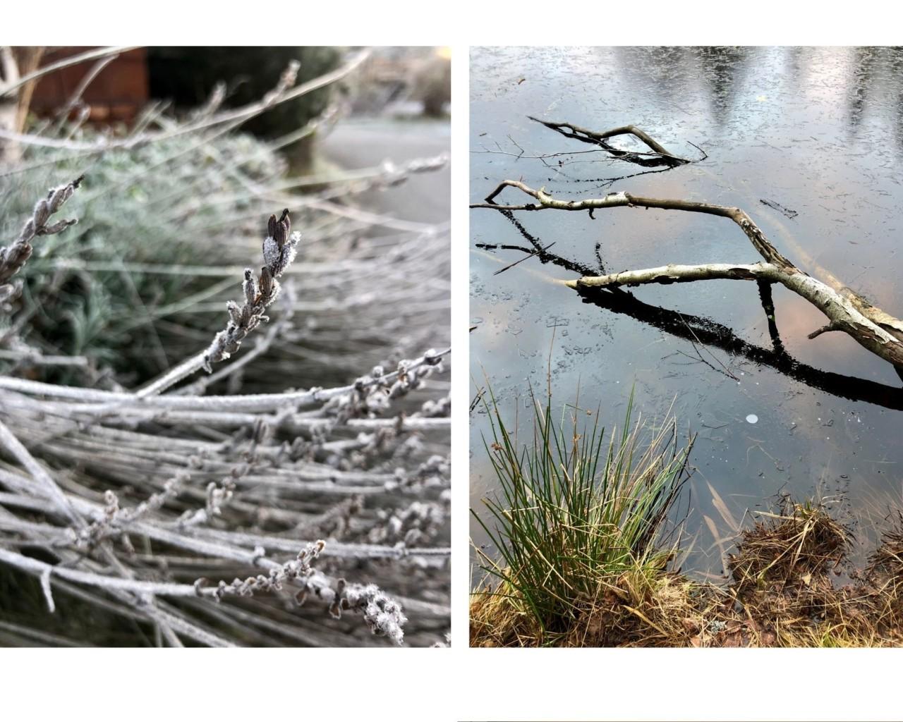 vinter-2020-jul-frost-rim-nesodden-greenhouse