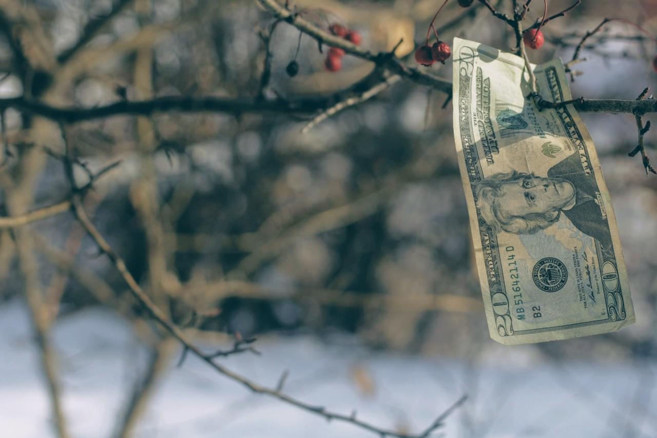joshua-hoehne-penger-vokser-paa-traer-money-grows-on-trees