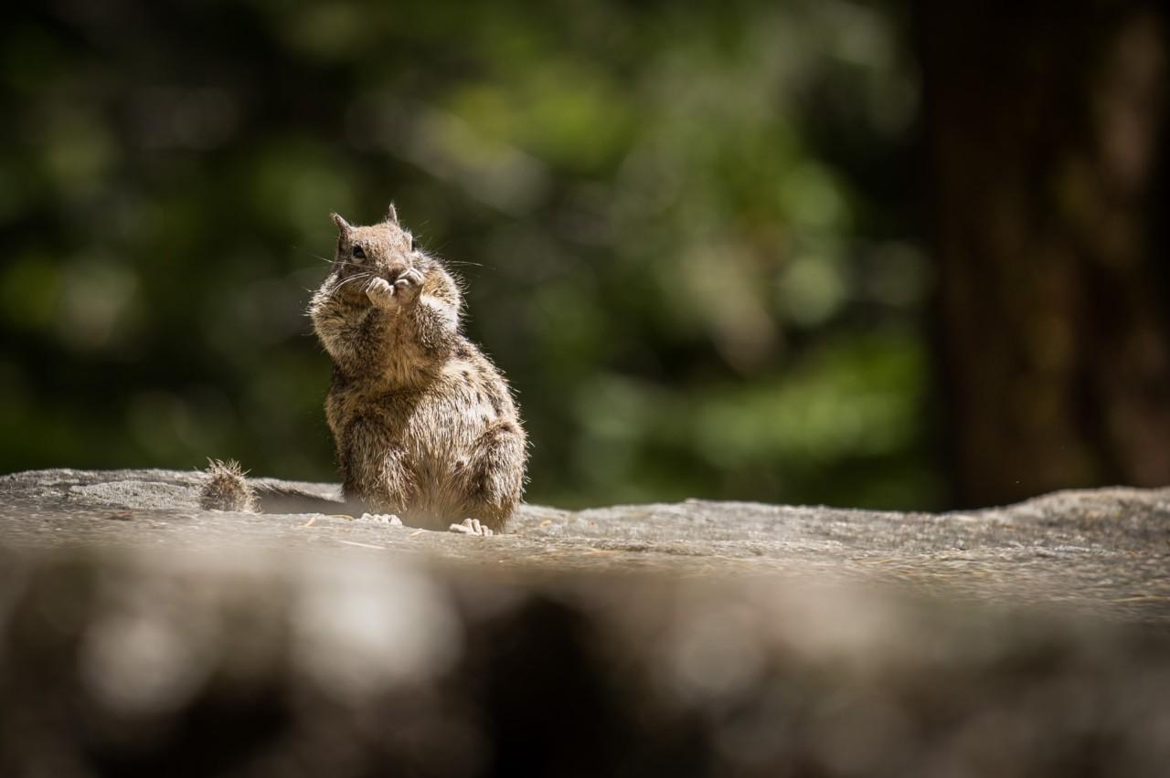 marcelo-vaz-squirrel-ekorn-frykt-redd-unsplash